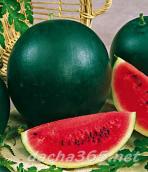 7 самых-самых сортов арбузов | русская семерка