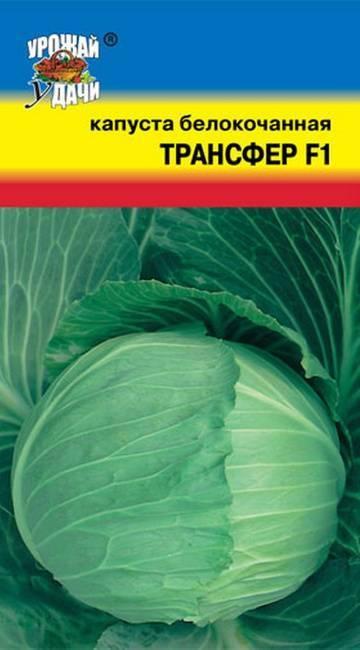Капуста для любителей свежих салатов – дитмарская ранняя. внешний вид, минусы, плюсы, выращивание