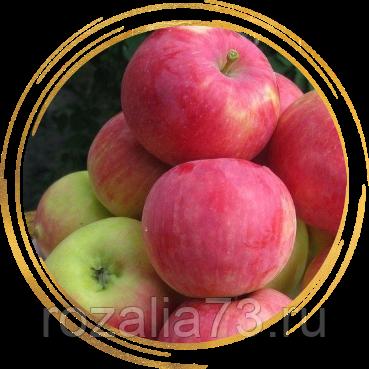 Яблоня мантет — зарубежный гость с русскими корнями