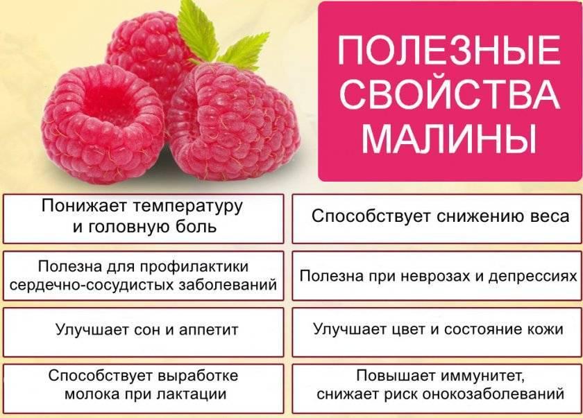 Малина: польза и вред для здоровья организма