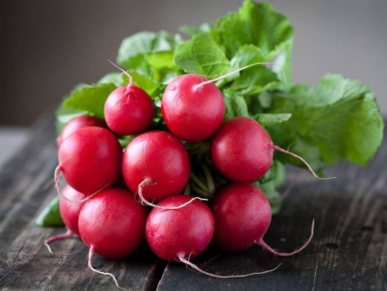 Как собрать 5 кг редиса с 1 кв.м – посев, выращивание и правильные сорта