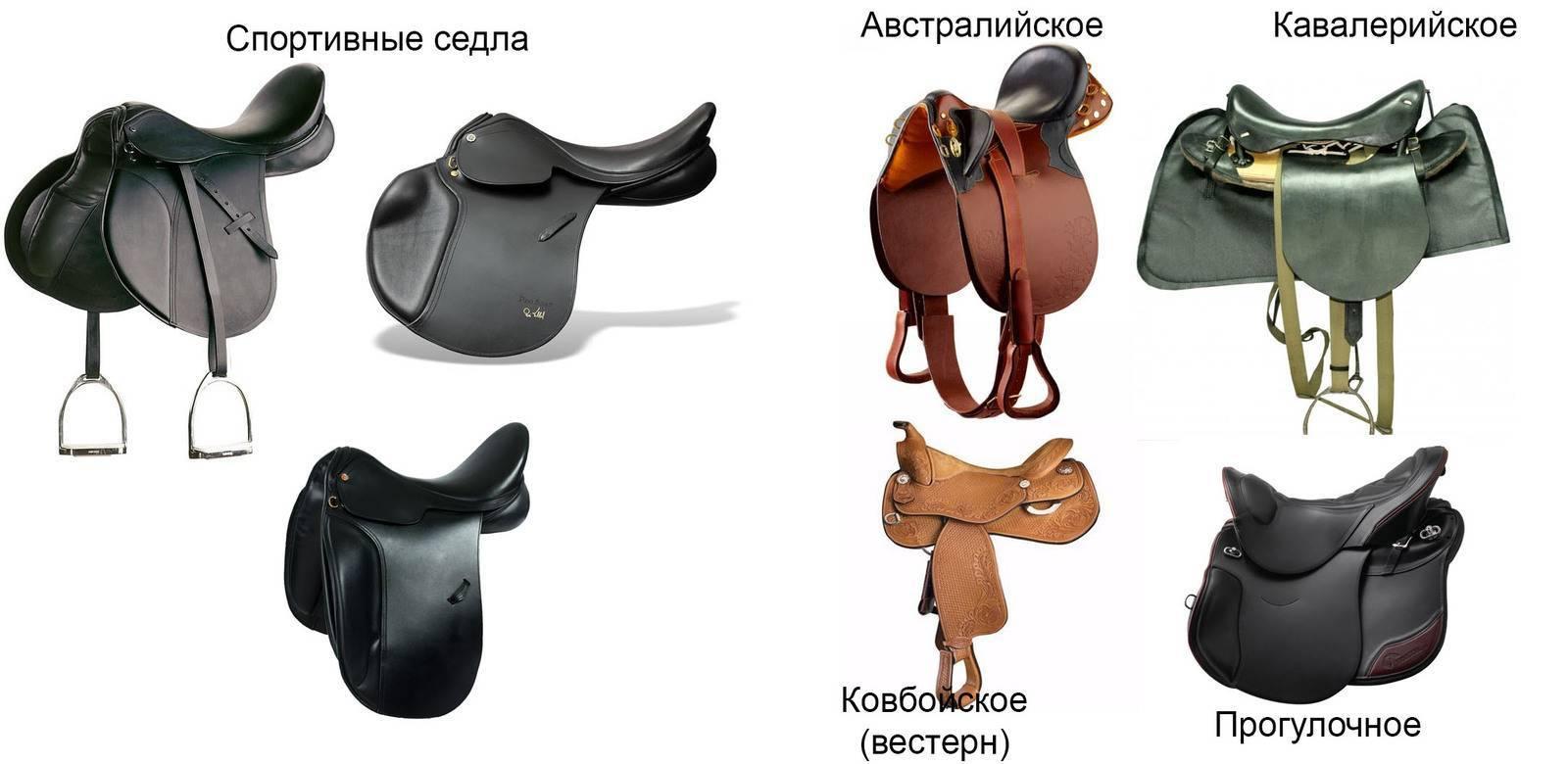 Амуниция для лошадей: в снаряжение для коня входят ошейник, хомут, стремена, ногавки