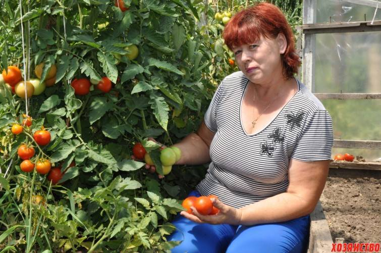 Способы удобрения рассады йодом. применение йода для рассады помидор