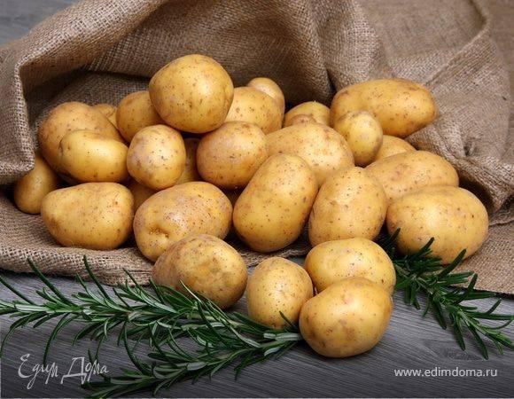 Каталог сортов картофеля с красной кожурой