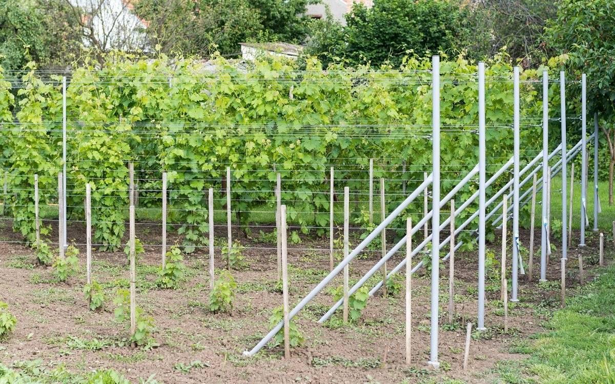 Посадка винограда: фото и видео советы как правильно и когда лучше всего сажать виноград