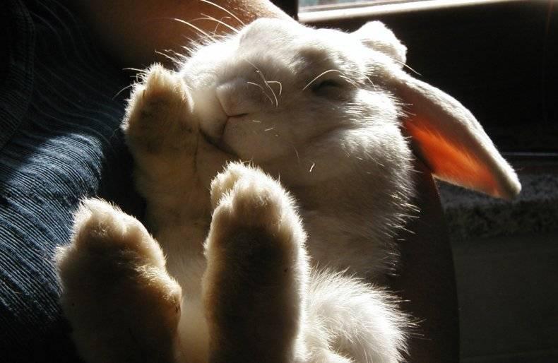 Как спасти кроликов от жары - полезные советы - 2020