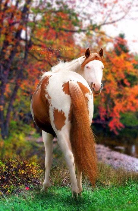 Серая масть лошадей