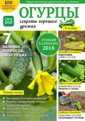 Как выращивать огурцы на открытом грунте