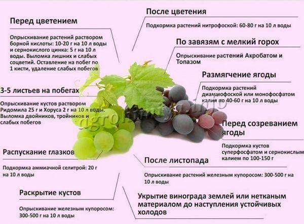 Простые способы подкормки и удобрения винограда, изготовление удобрений и смесей