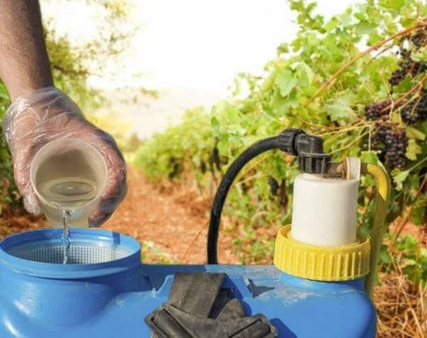 Чем обработать виноград от болезней и вредителей, насекомых: список препаратов и народных методов