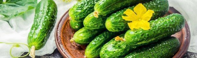 Огурцы на подоконнике: технология выращивания