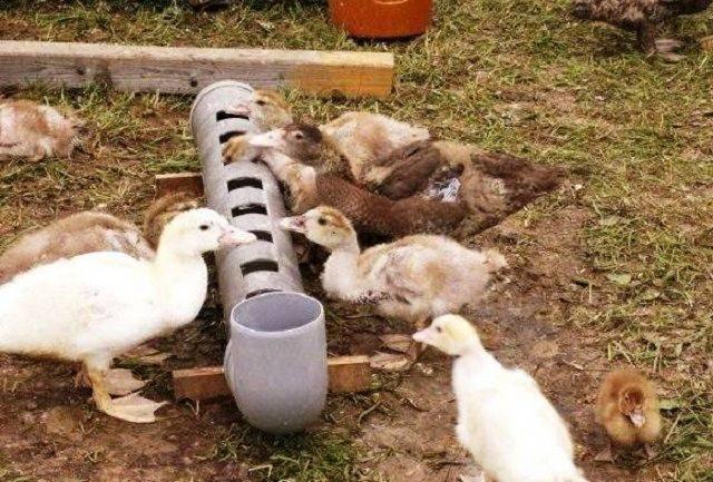 Как сделать домик для утки на воде