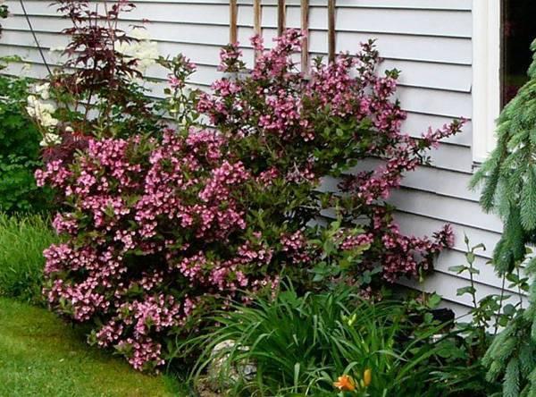 Многолетние тенелюбивые растения для сада (52 фото): неприхотливые цветы и теневыносливые кустарники-многолетники, цветущие все лето
