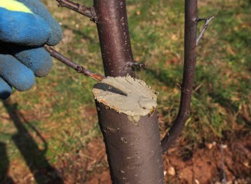 Грамотный уход за яблонями весной. советы агрономов для отличного урожая