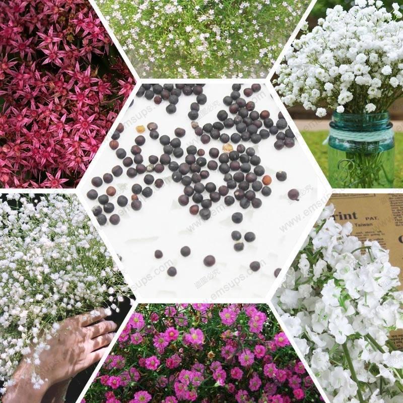Виды многолетних сухоцветов с фото и названием