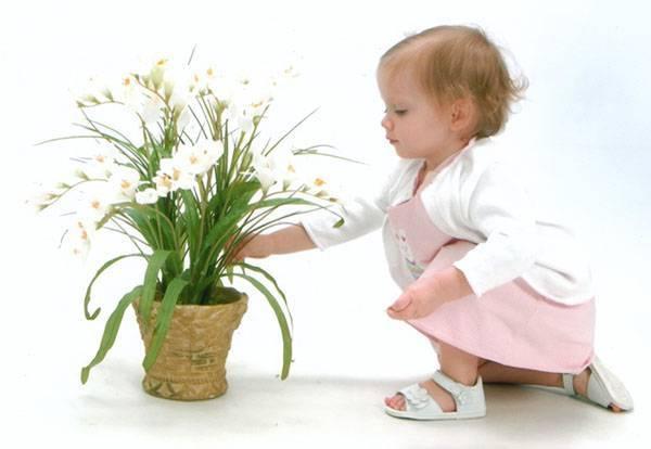 Комнатные растения и новорожденный: допустимо ли такое соседство?