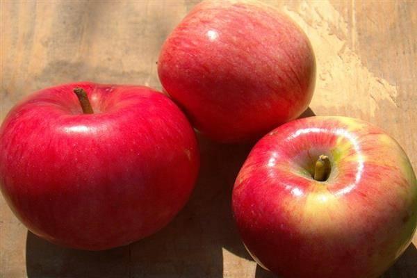Декоративная яблоня – ола, роял бьюти, макамик, пионерка, эверест и другие сорта