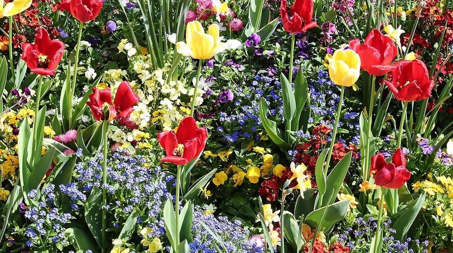 Какие цветы сажать весной в грунт: 10 подходящих видов