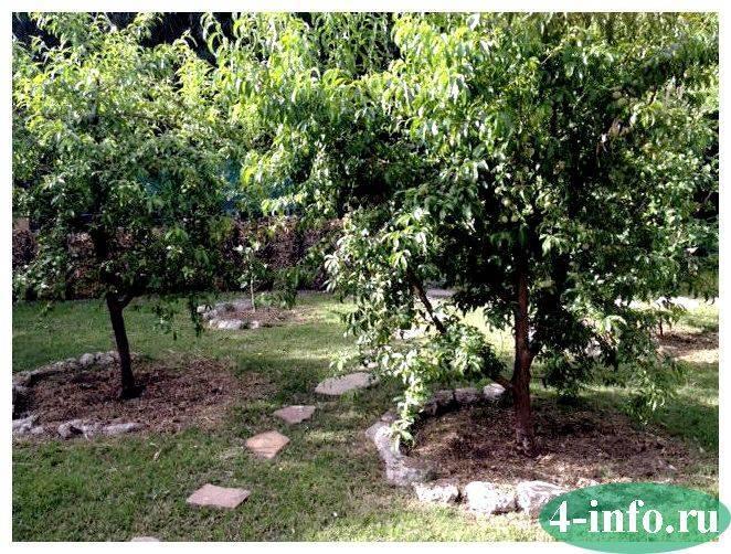 Что посадить под яблоней в саду — 11 лучших вариантов