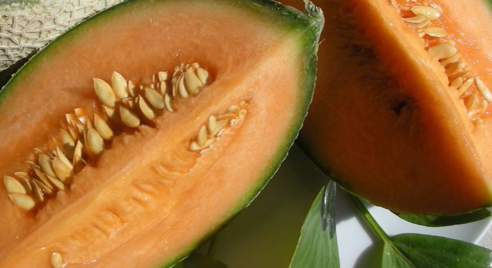 Что такое дыня канталупа - плодовые кустарники - 2020