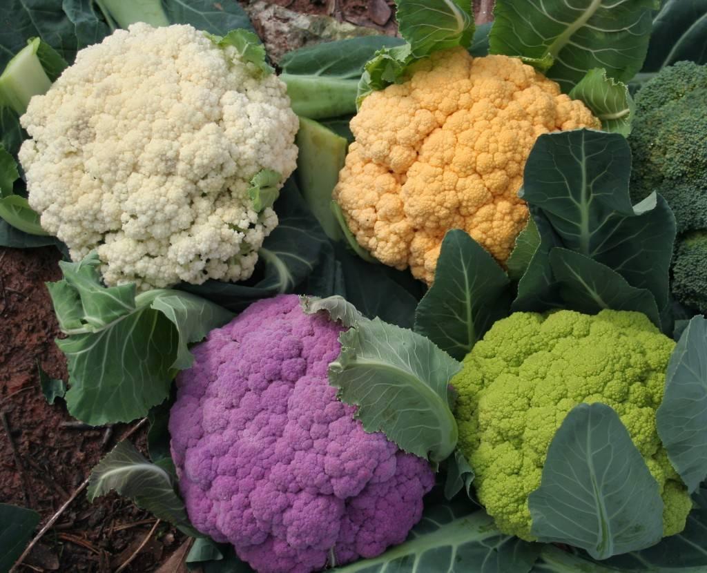 Цветная капуста — полезно и вкусно!