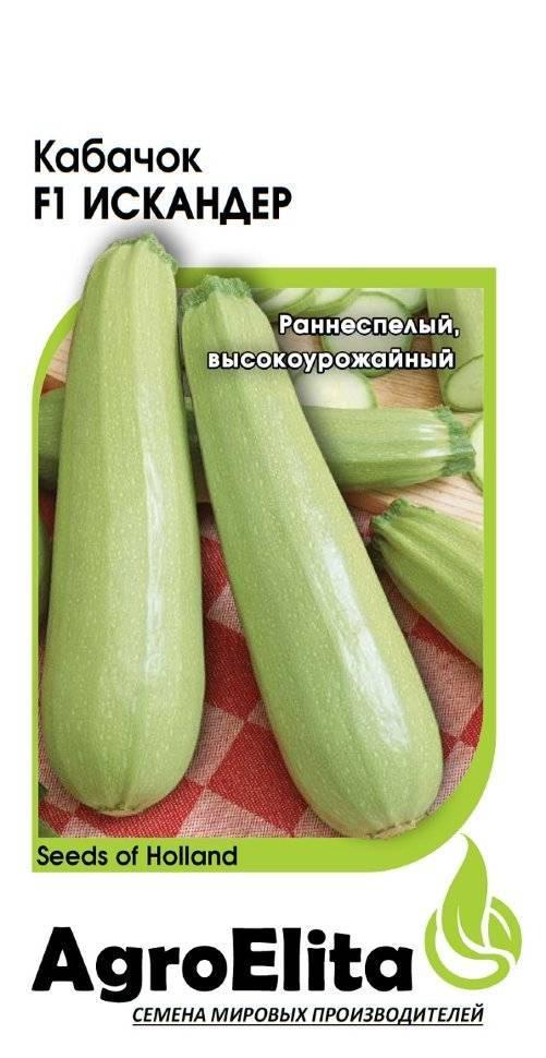 В чем особенности сорта кабачков искандер
