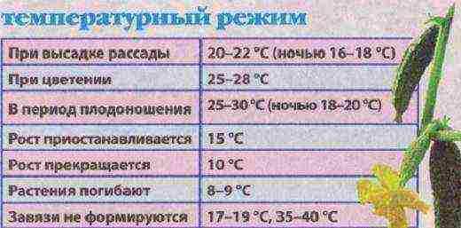 Схема посадки огурцов в теплице - варианты и инструкция