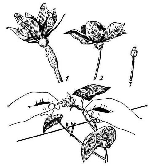 Балуемся огурцами круглый год: технология выращивания на подоконнике и подходящие сорта