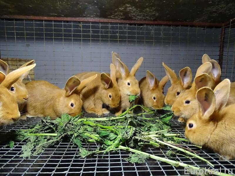Чем нельзя кормить кроликов в домашних условиях