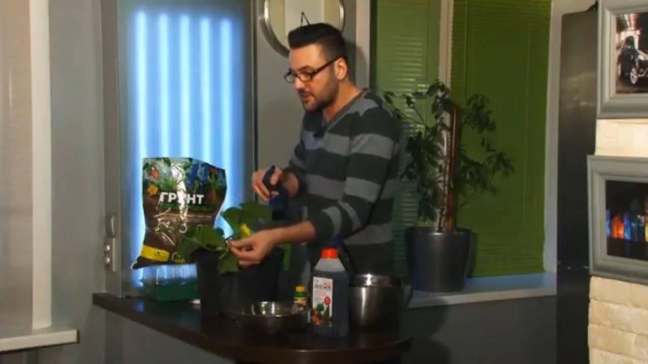Огурцы на подоконнике зимой: лучшие сорта, перечь и описание сортов