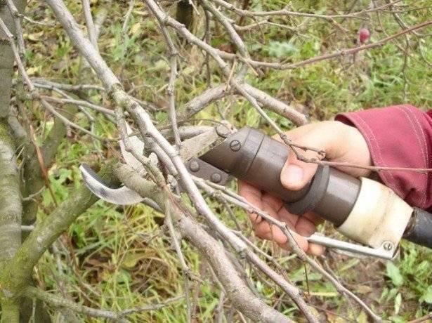 Обрезка деревьев весной для начинающих в картинках пошагово (схема)