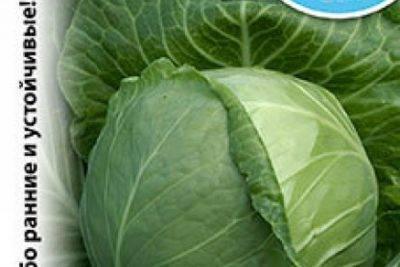 Как и когда высаживать рассаду цветной капусты в открытый грунт