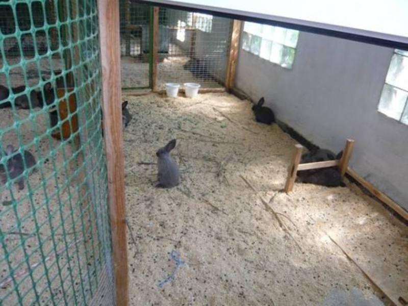 Как построить вольер для кроликов?