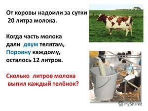 Сколько молока даёт корова в сутки
