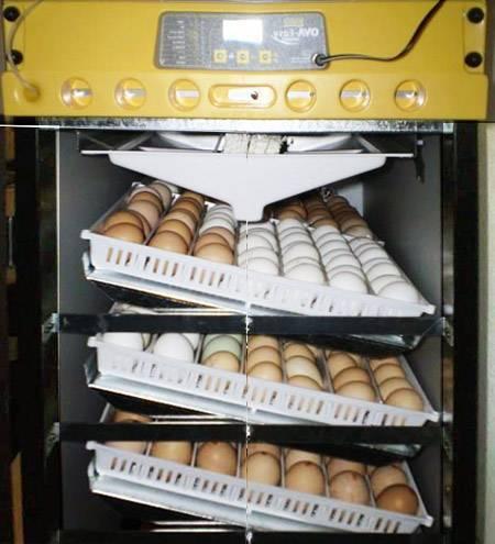 Какой выбрать инкубатор для яиц: характеристика лучших - общая информация - 2020