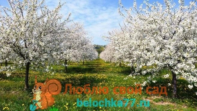 Опрыскивание сада весной от вредителей и болезней