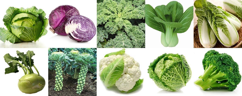 Девять самых известных разновидностей капусты: какие существуют, как называются и как выглядят?