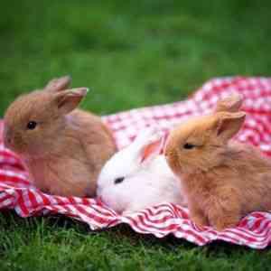 Почему крольчиха не кормит крольчат и что делать?