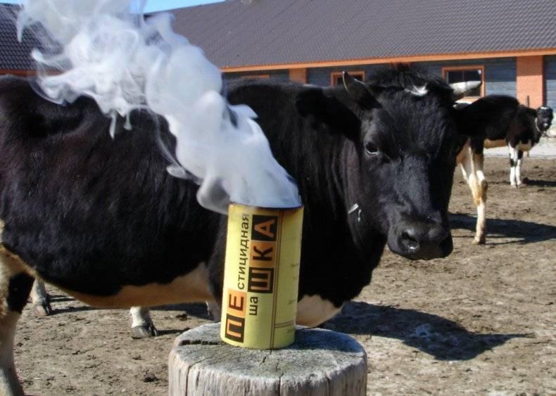 Как защитить корову от клещей, мух, гнуса? | агропромышленный вестник