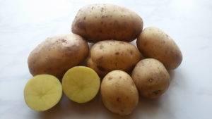 Сорт картофеля нандина характеристика