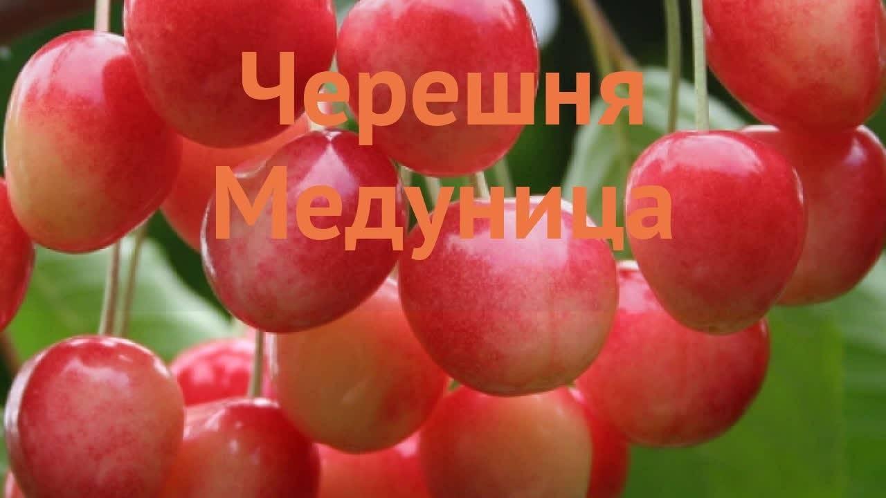 Черешня в крыму когда созревает - 7ogorod.ru