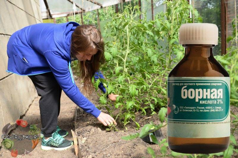 Борная кислота в огороде