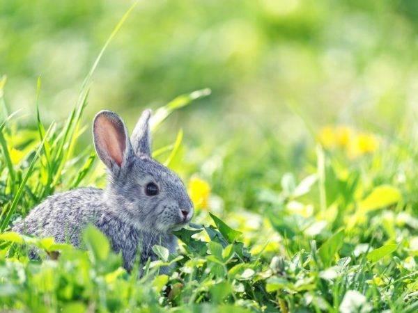 Списки продуктов, которые можно и нельзя давать кроликам - общая информация - 2020