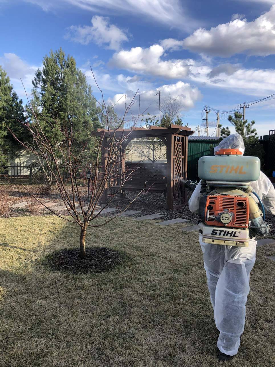 Опрыскивание яблонь весной от вредителей – практическое руководство для начинающих садоводов
