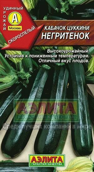 О сорте кабачка цуккини Негритенок: описание сорта, как сажать, выращивать
