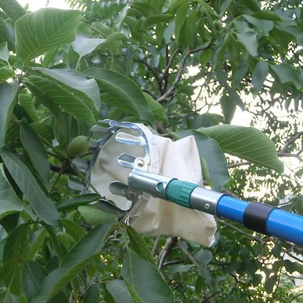 Плодосъемник для фруктов своими руками – чертежи. плодосборники для сбора яблок с телескопической ручкой, цанговые и с захватом насадка для снятия яблок