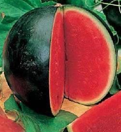 Описание и характеристика ранних сортов арбуза
