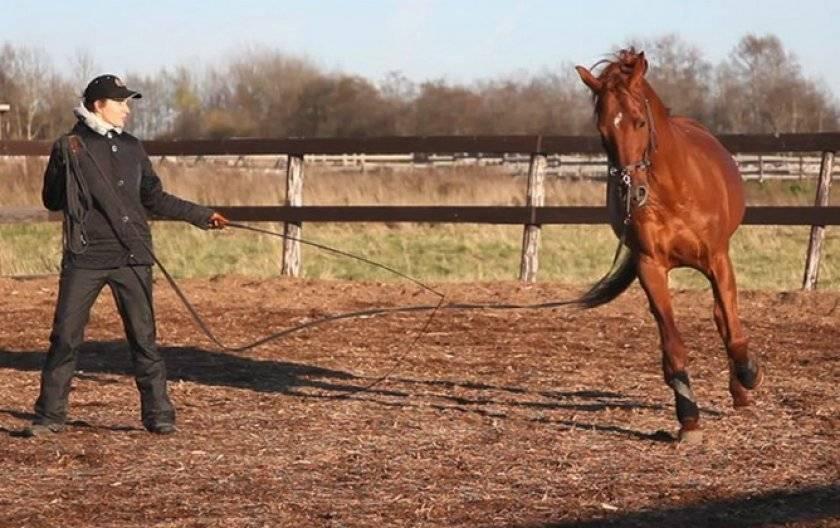 Какие бывают виды аллюров лошадей и их отличия, дополнительные рекомендации