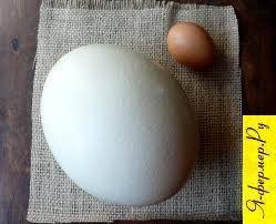Как часто несутся страусы, сколько яиц в месяц