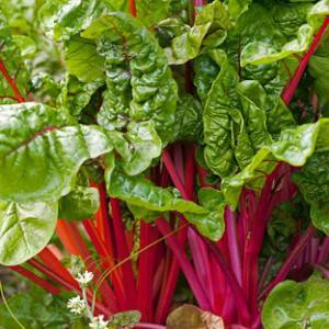 Красная, белая и листовая свекла. полезные свойства, способы выращивания и применение